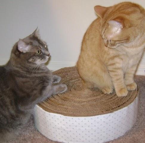 C mo hacer un rascador de cart n circular para tu gato - Casas para gatos baratas ...