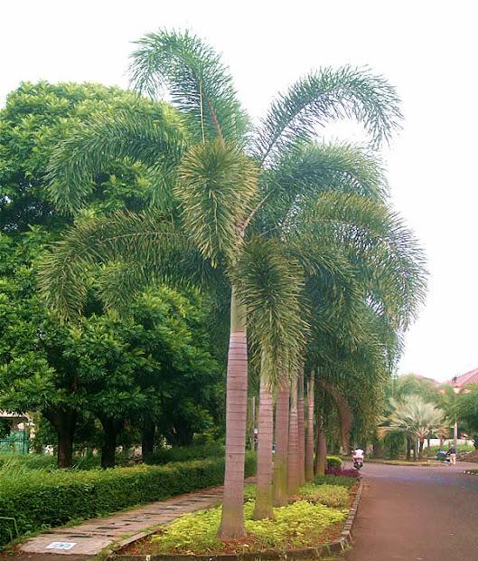street palm trees landscape