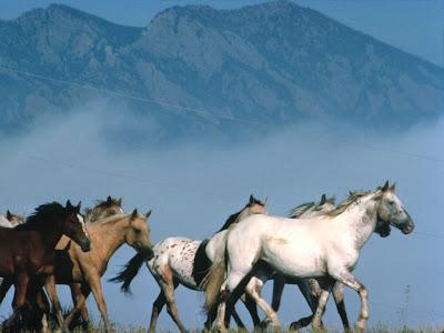 horse wallpaper. Horses Wallpapers