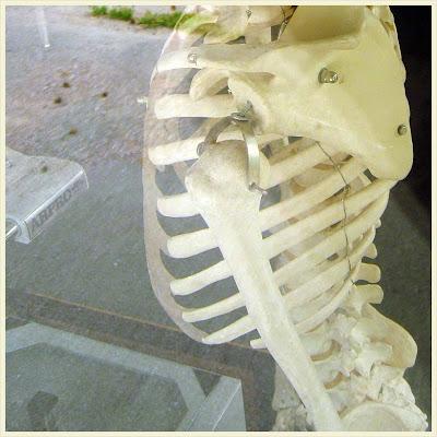 Skelettet Åke vaktar skolans overhead.