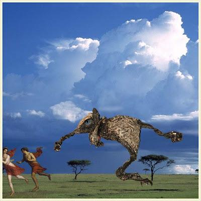 En död, torr groda på savannen.