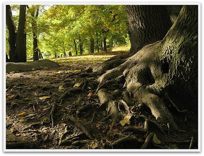 Rötter som är snygga på ett organiskt sätt.
