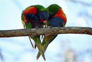 love , ask , sevda , sevgi , birds