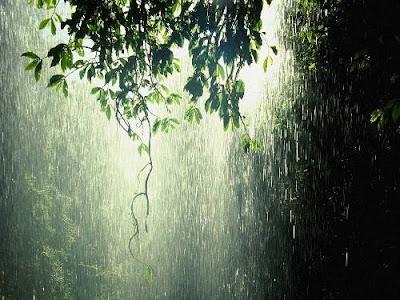 rain , forest , orman , yagmur