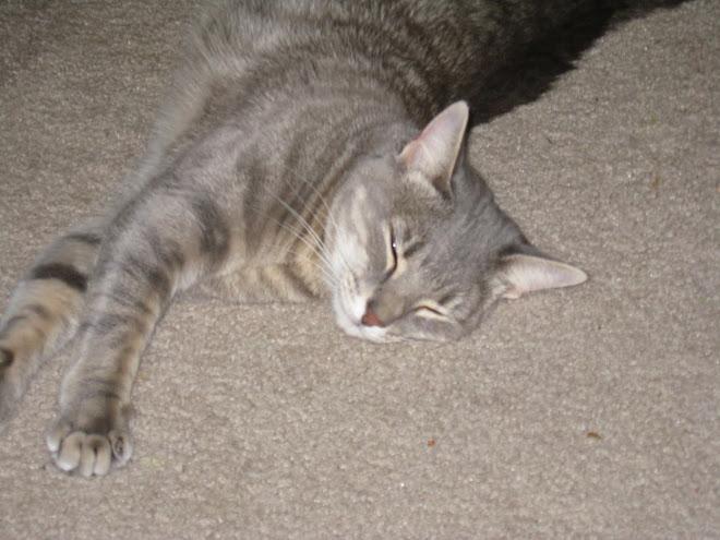 Graycat Strut