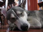 Celeste the Wonderdog