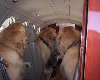 http://1.bp.blogspot.com/_8DRsWdYawjQ/TFrFGcJL1PI/AAAAAAAAAOA/UBtyqHm07lM/s1600/dogs_on_a_plane.jpg