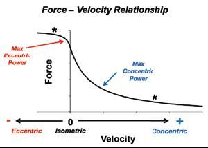 force velocity relationship in eccentric contractions and doms