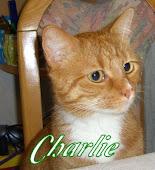 Katzenpersonal Kerry von
