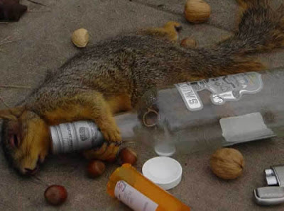 pic of drunk squirrel