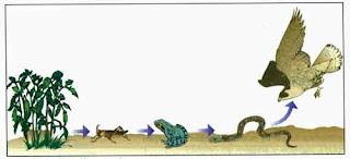 de los organismos autotrofos los organismos heterotrofos no son