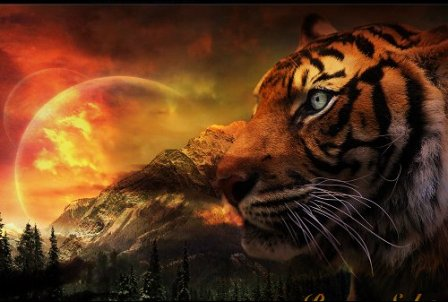 Free Wildlife & Animal wallpapers, Animal Desktop Pictures, Photos, Images