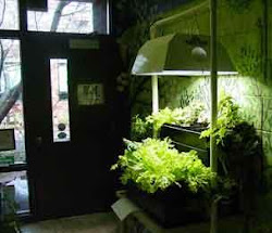 A complete guide to indoor tomato gardening followers workwithnaturefo