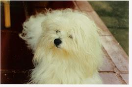 TICO - MY PET
