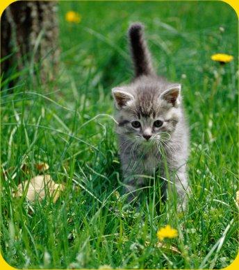 In Cat Timp Se Poate Lua Proba De Scaun