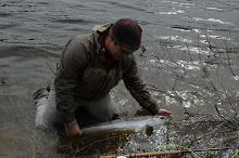 Miramichi - Atlantic Salmon