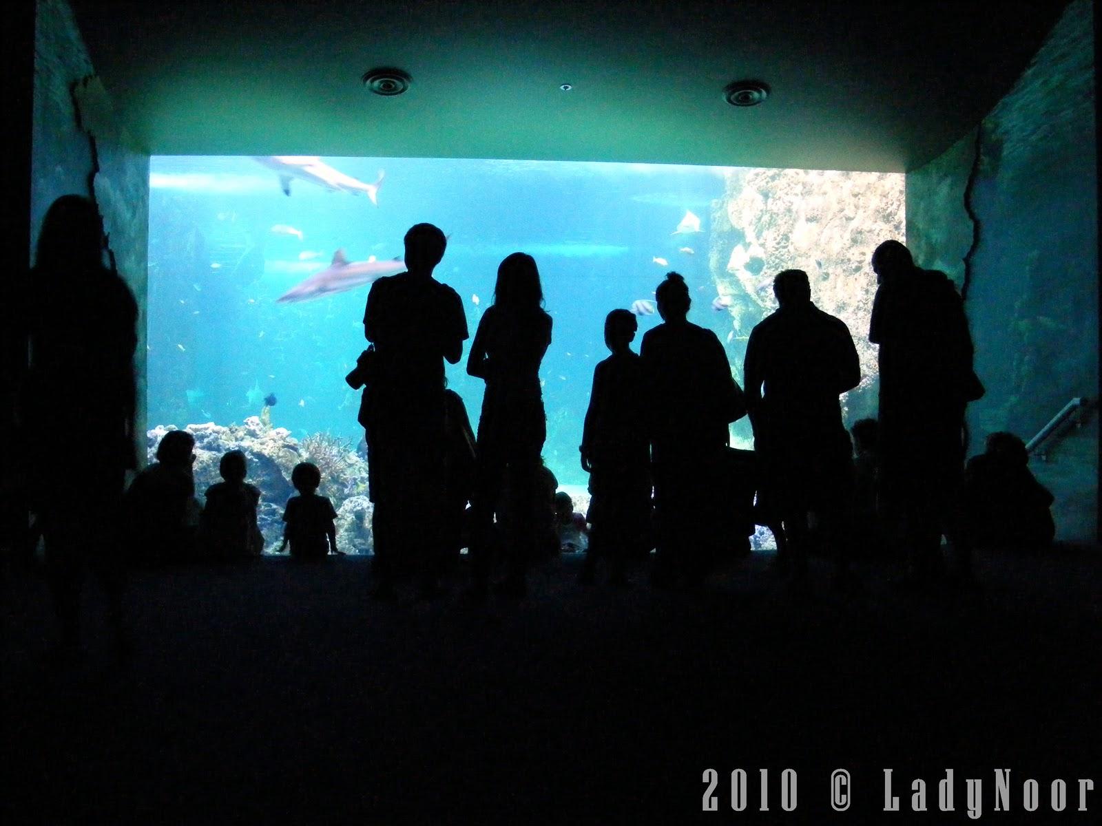 http://1.bp.blogspot.com/_8JDEdswG5Yo/TOYtJzNJVxI/AAAAAAAAEb8/Z6-5tooVtiE/s1600/aquarium.jpg