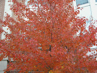 autumn leaves orange