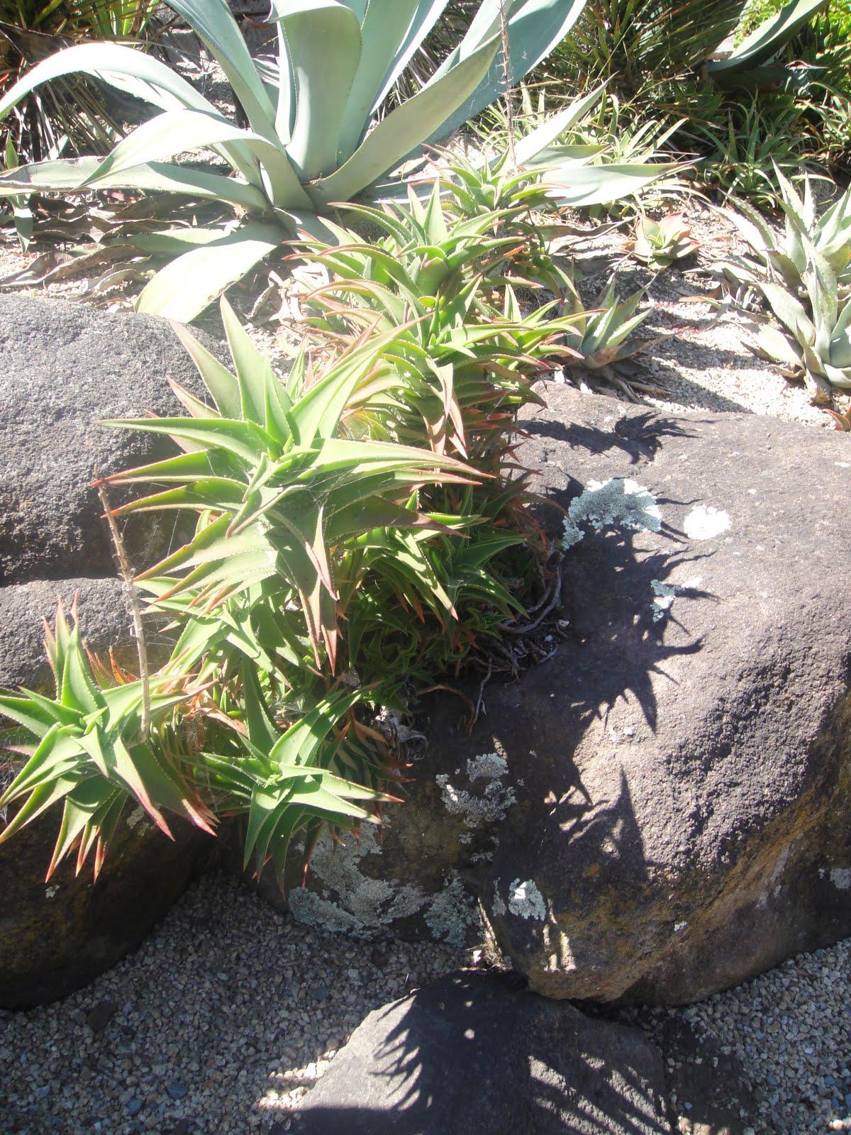 Succulent Rock Garden Ideas Photograph Got some ideas for