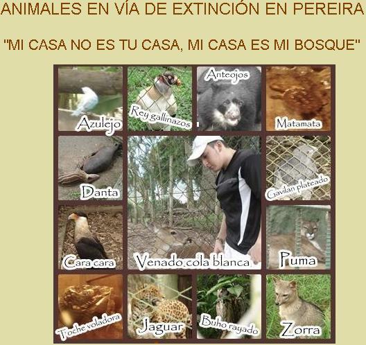Animales en vía de extinción en Pereira