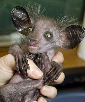 One ugly monkey