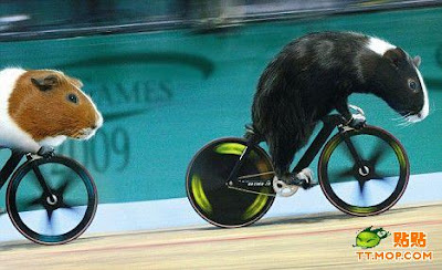 http://1.bp.blogspot.com/_8M4A38LyBBs/Sq6BX0z15gI/AAAAAAAAOsU/IaJ8_N7Oy4c/s400/Olympic+mouse2.jpg