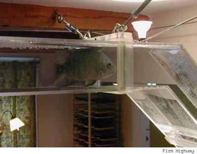 Cool Fish Tanks Aquariums
