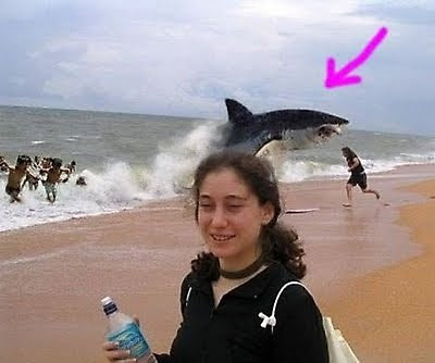 funnier animals laughed loud animal photo bomb