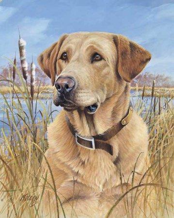 http://1.bp.blogspot.com/_8MS1Y4dJrlk/TCsMkQBSqOI/AAAAAAAAAGg/n7iwUwgLShQ/s1600/Thats_My_Dog_Yellow_Lab_JK.jpg