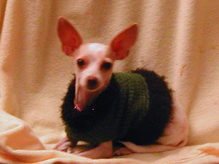This green dog sweater is still for sale at All Things Tangled