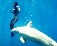 http://sofadasala-noticias.blogspot.com.br/2009/07/baleia-beluga-salva-mergulhadora.html