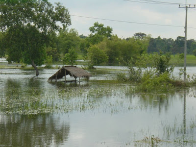 Rice Field Flooding