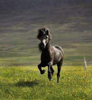 Dating for hest venner
