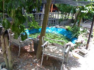 Kami ingin mencuba menternak ikan keli dalam kolam yang dibena dari ...