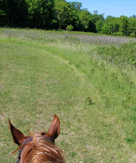 Riding through meadow