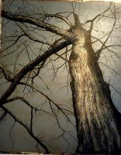 L'arbre en majesté