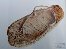 sandale fibre de papyrus 1500av JC
