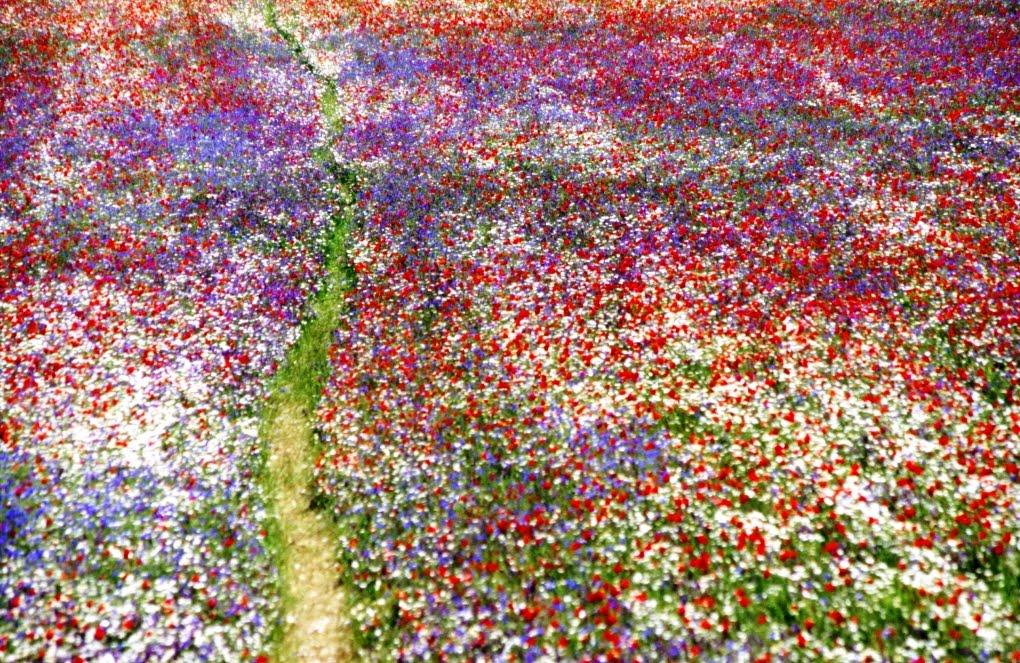 Pota pota blog 55 0 e primavera che belli quei prati for Fiori immagini e nomi