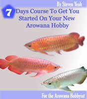 The truth about keeping your Arowana healthy and alive