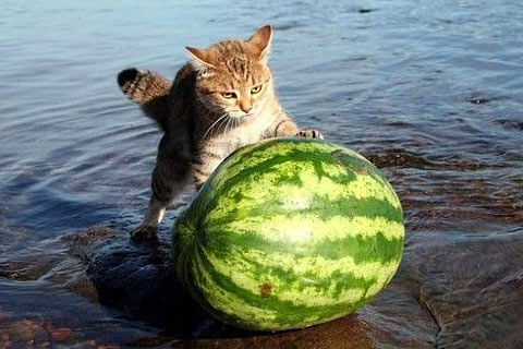 funny cats videos. Funny Cats Video.