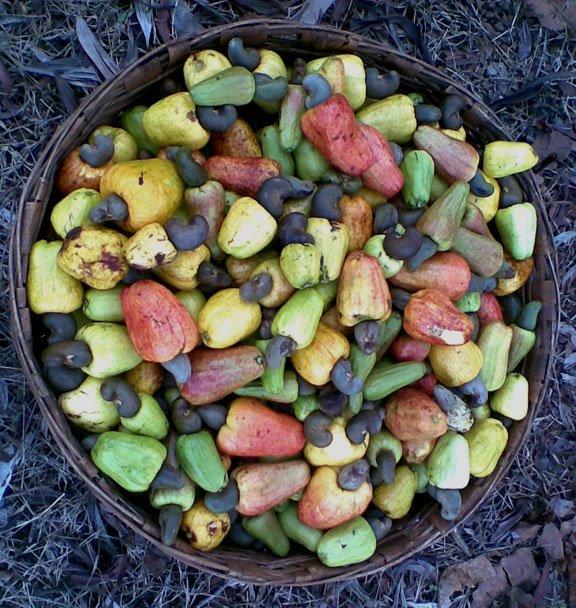[cashew+fruits.jpg]