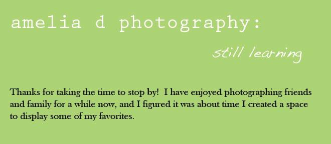 amelia d photography