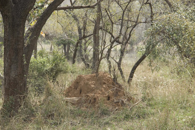 Anthill in Sariska