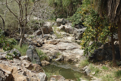 A watering hole inside Sariska
