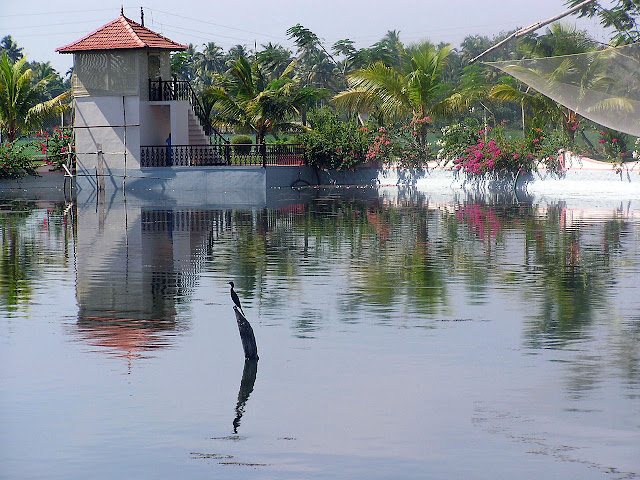 A bird in the middle of the water inside the Lake View Hotel in Alleppey, looks like a very calm location