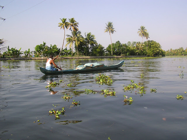 Man paddling his small boat along the waterway in Alleppey, Kerala, in the midst of greenery, and weed covered water