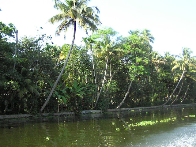 The greenery to the side of the canal in Kerala, near the town of Alleppey