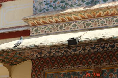 Photo of A pigeon sitting near a wonderfully decorated section of the Jaipur City Palace