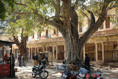 A large tree along with bikes and people outside the Jaipur City Palace
