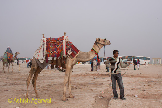 Cairo Pyramid Photo - Man posing with his camel near the Great Pyramid in Giza